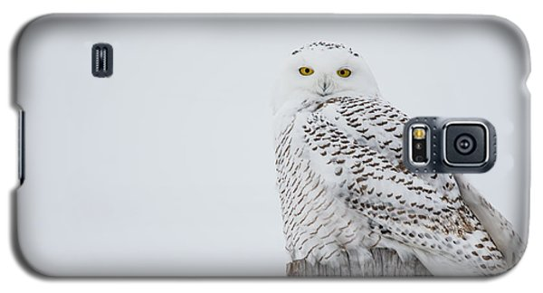 Snowy Owl Perfection Galaxy S5 Case