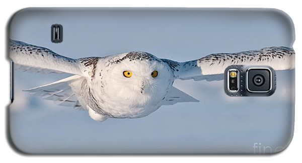 Snowy Owl Pictures 10 Galaxy S5 Case