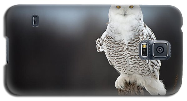 Snowy Owl Pictures 13 Galaxy S5 Case