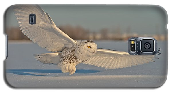 Snowy Owl Pictures 7 Galaxy S5 Case