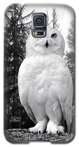 Galaxy S5 Case featuring the photograph Snowy  by Adam Olsen