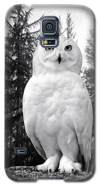 Snowy  Galaxy S5 Case