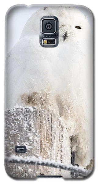 Snowy Owl Galaxy S5 Case by Ricky L Jones