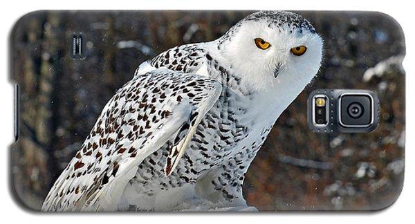 Snowy Owl Galaxy S5 Case by Rodney Campbell