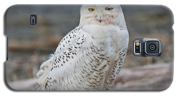 Snowy Owl Watching From A Driftwood Perch Galaxy S5 Case