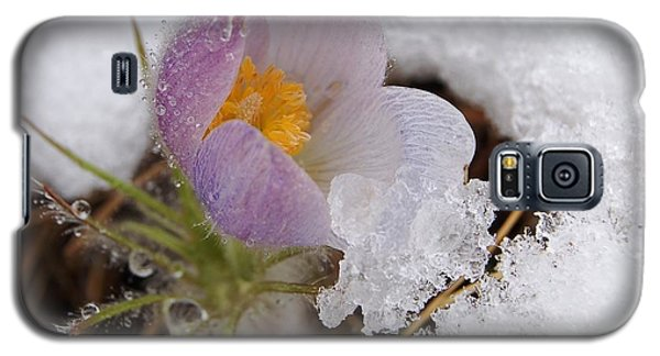 Snowy Pasqueflower Galaxy S5 Case