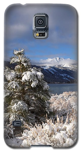 Snowy Pine  Galaxy S5 Case by Duncan Selby