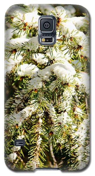 Snowy Pines Galaxy S5 Case