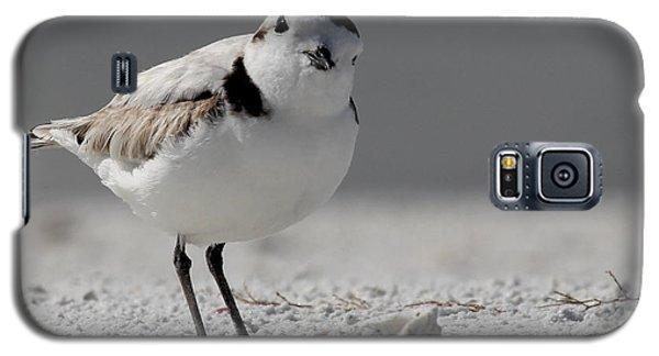 Snowy Plover Galaxy S5 Case