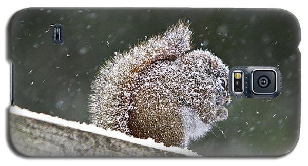 Snowy Squirrel Galaxy S5 Case
