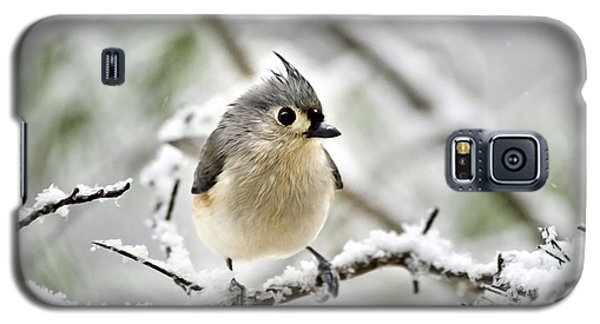 Snowy Tufted Titmouse Galaxy S5 Case by Christina Rollo