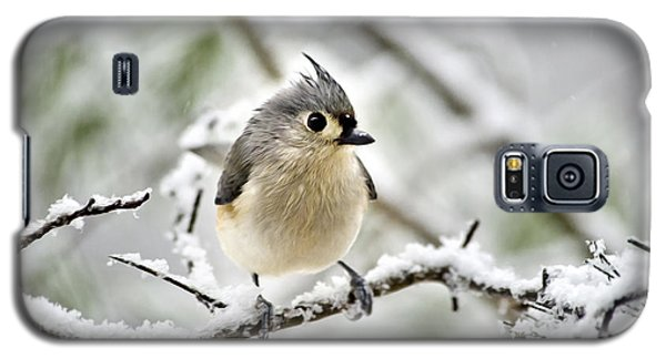 Snowy Tufted Titmouse Galaxy S5 Case
