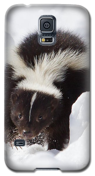 Snowy Walk Galaxy S5 Case