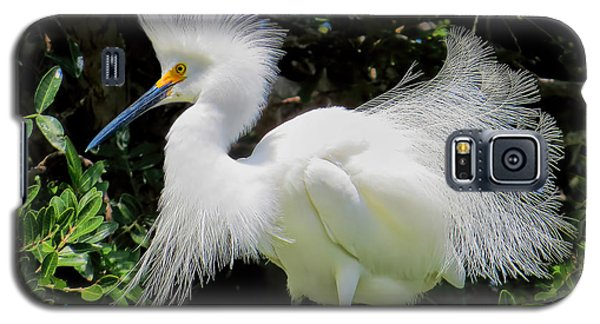 Snowy White Egret Breeding Plumage Galaxy S5 Case by Jennie Breeze