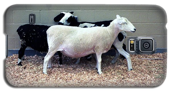 Galaxy S5 Case featuring the photograph Snuggling Goats by Philomena Zito