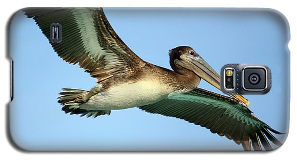 Galaxy S5 Case featuring the photograph Soaring Pelican by Suzanne Stout