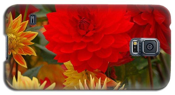 Galaxy S5 Case featuring the photograph Sockeye And Upmost Dahlias by Jordan Blackstone