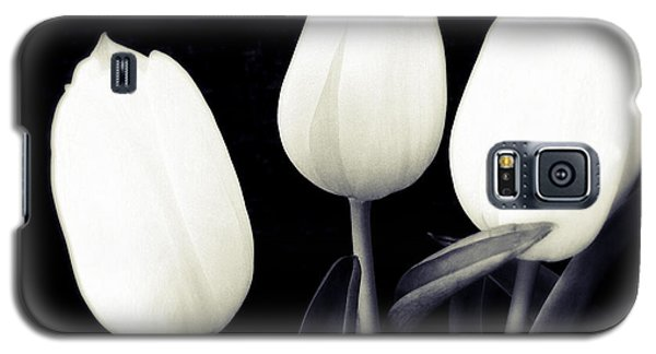 Soft And Bright White Tulips Black Background Galaxy S5 Case by Matthias Hauser