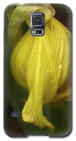 Galaxy S5 Case featuring the photograph Soft Evening Rain - Missouri Primrose Art Print by Jane Eleanor Nicholas