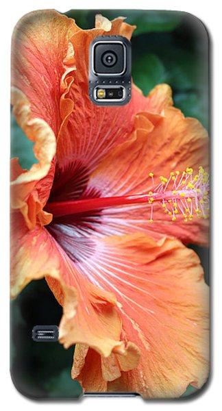 Soft Orange Hubiscus Galaxy S5 Case