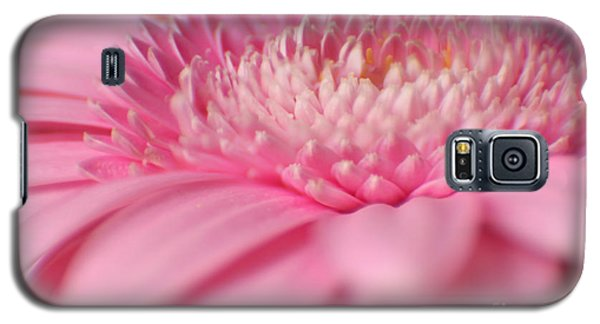 Soft Pink Gerbera Daisy Galaxy S5 Case by Eden Baed