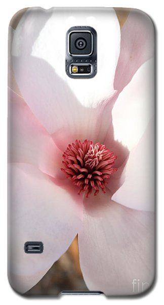 Saucer Magnolia Galaxy S5 Case - Soft Pink Saucer Magnolia by Carol Groenen