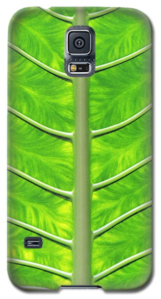 Solar Panel Leaf Veins Galaxy S5 Case