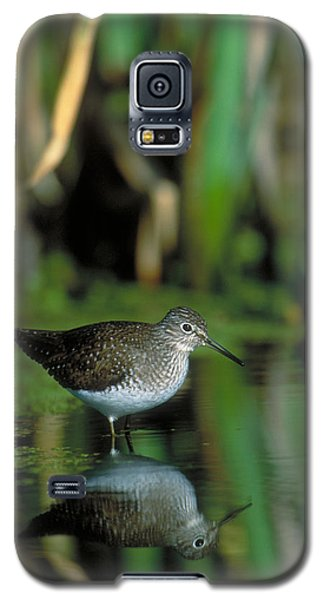 Solitary Sandpiper Galaxy S5 Case by Paul J. Fusco