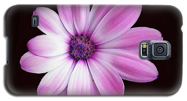 Solo Purple Flower Galaxy S5 Case