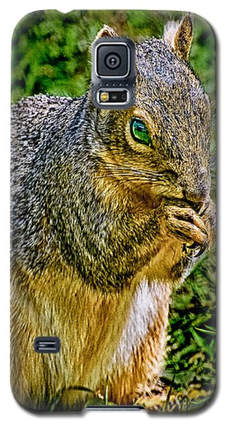 Some Squirrels Are Big Galaxy S5 Case