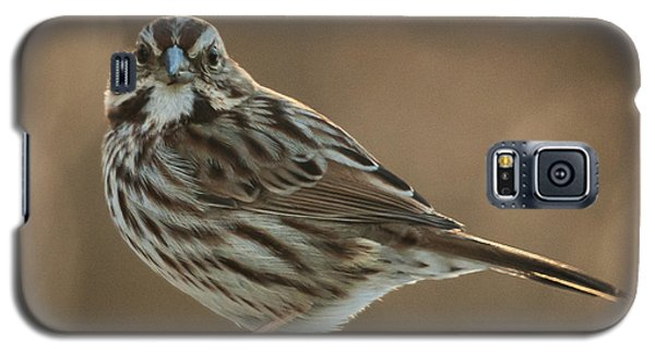 Song Sparrow Galaxy S5 Case by Jim Moore