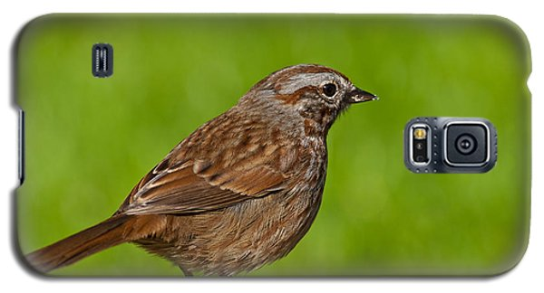 Song Sparrow On A Log Galaxy S5 Case