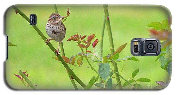 Song Sparrow Galaxy S5 Case by Rima Biswas