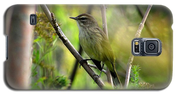 Galaxy S5 Case featuring the photograph Songbird In The Glen by Kimberly Mackowski