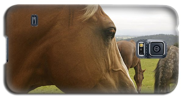 Sorrel Horse Profile Galaxy S5 Case by Belinda Greb
