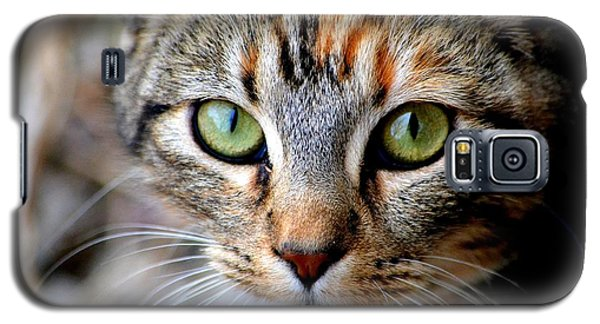 Galaxy S5 Case featuring the photograph Soul Cat by Deena Stoddard