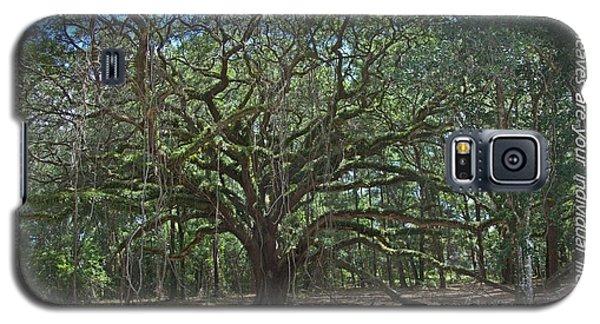 Soul Tree Galaxy S5 Case by Dodie Ulery