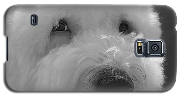 Soulful Eye's Old English Sheep Dog Galaxy S5 Case