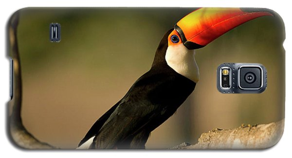 South America, Brazil, Pantanal, Mato Galaxy S5 Case by Joe and Mary Ann Mcdonald