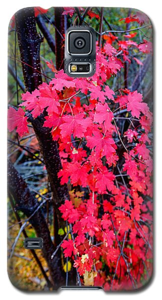 Southern Fall Galaxy S5 Case by Chad Dutson