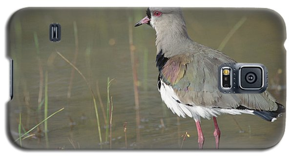 Southern Lapwing In Marshland Pantanal Galaxy S5 Case