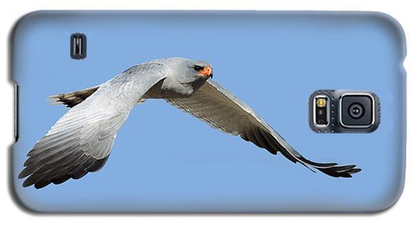 Hawk Galaxy S5 Case - Southern Pale Chanting Goshawk In Flight by Johan Swanepoel