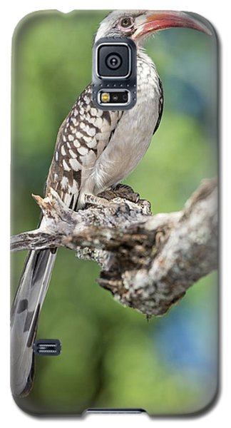 Southern Red-billed Hornbill Galaxy S5 Case