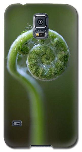 Southern Shield Fern Galaxy S5 Case