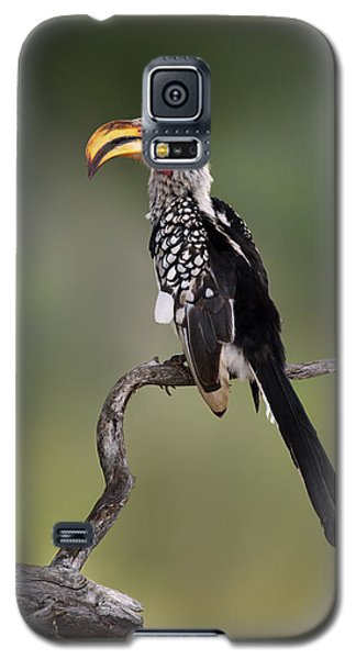 Southern Yellowbilled Hornbill Galaxy S5 Case
