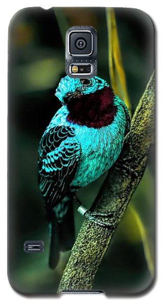 Galaxy S5 Case featuring the painting Spangled Cotinga Turquoise Bird by Tracie Kaska