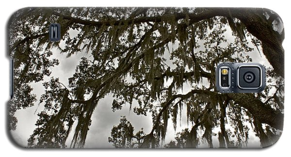 Galaxy S5 Case featuring the photograph Spanish Moss by Alice Mainville
