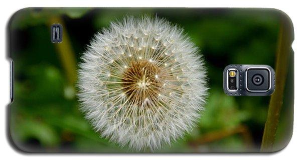 Galaxy S5 Case featuring the photograph Sparkling Dandelion by Debra Martz