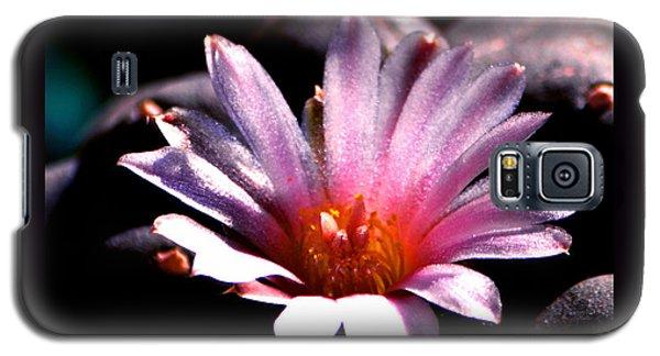 Sparkling Peyote Flower Galaxy S5 Case by Susanne Still