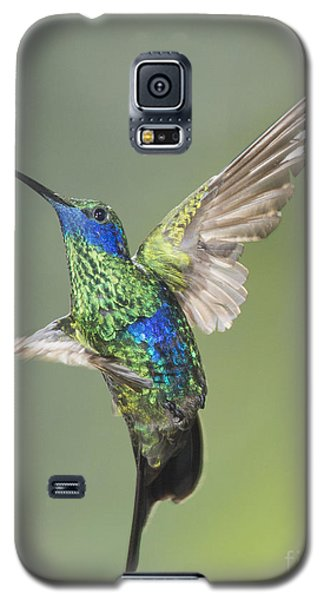 Sparkling Violet-ear Hummingbird Galaxy S5 Case